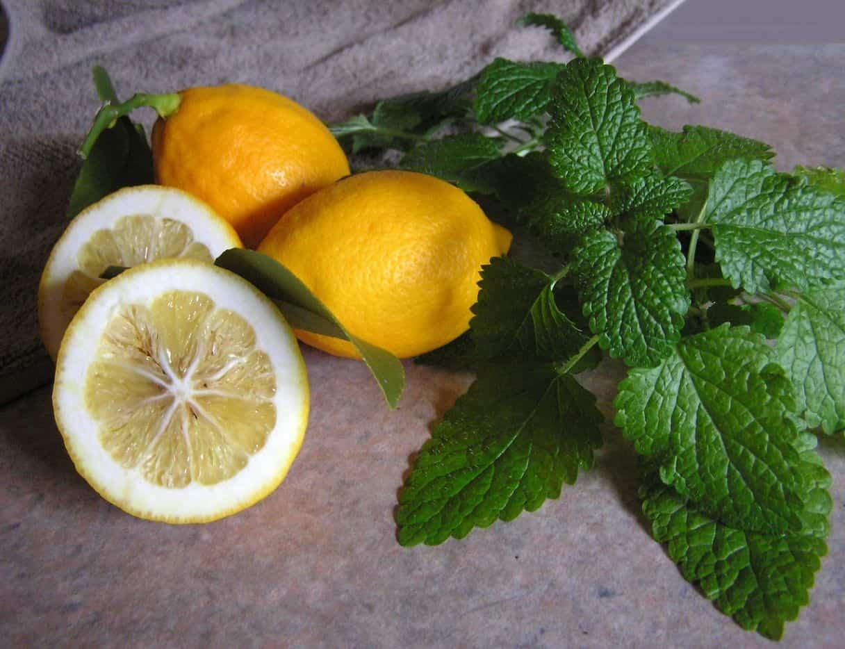 natural-remedies-garden-4-lemon-balm-pixabay