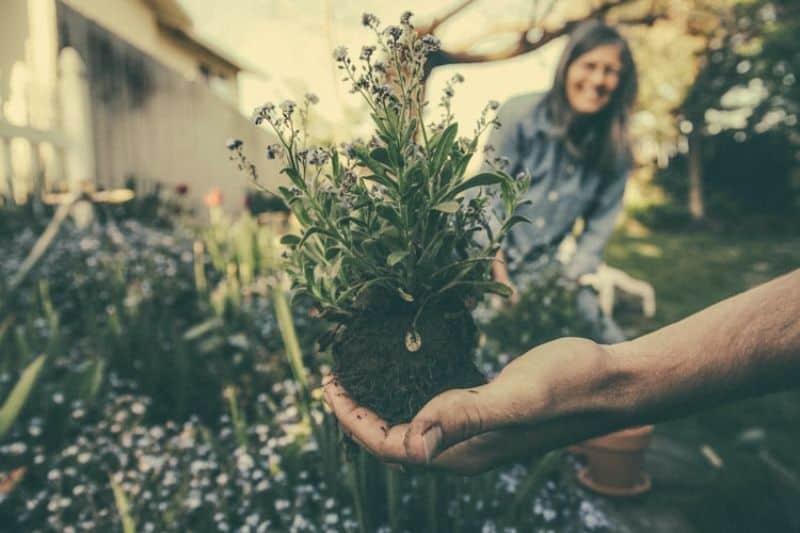 lockdown-basic-gardening-chores-4-month-by-month-gardening-checklist-unsplash