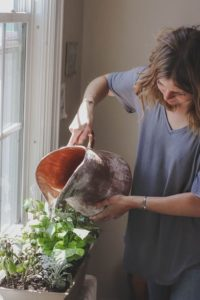 lockdown-basic-gardening-chores-5-houseplant-basic-care-unsplash
