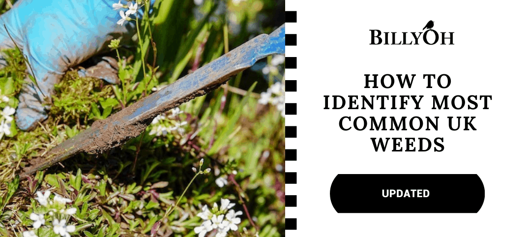 How to identify weeds UK with trowel pulling weeds out
