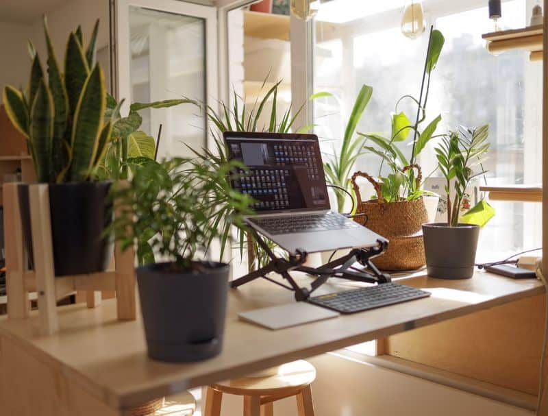 work desk with a laptop raised on a stand surrounding by green potted succulent plants