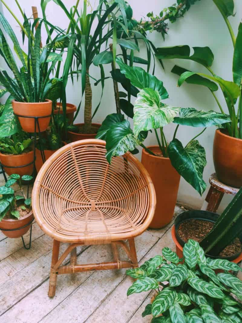 small rattan stool surrounded by potted plants