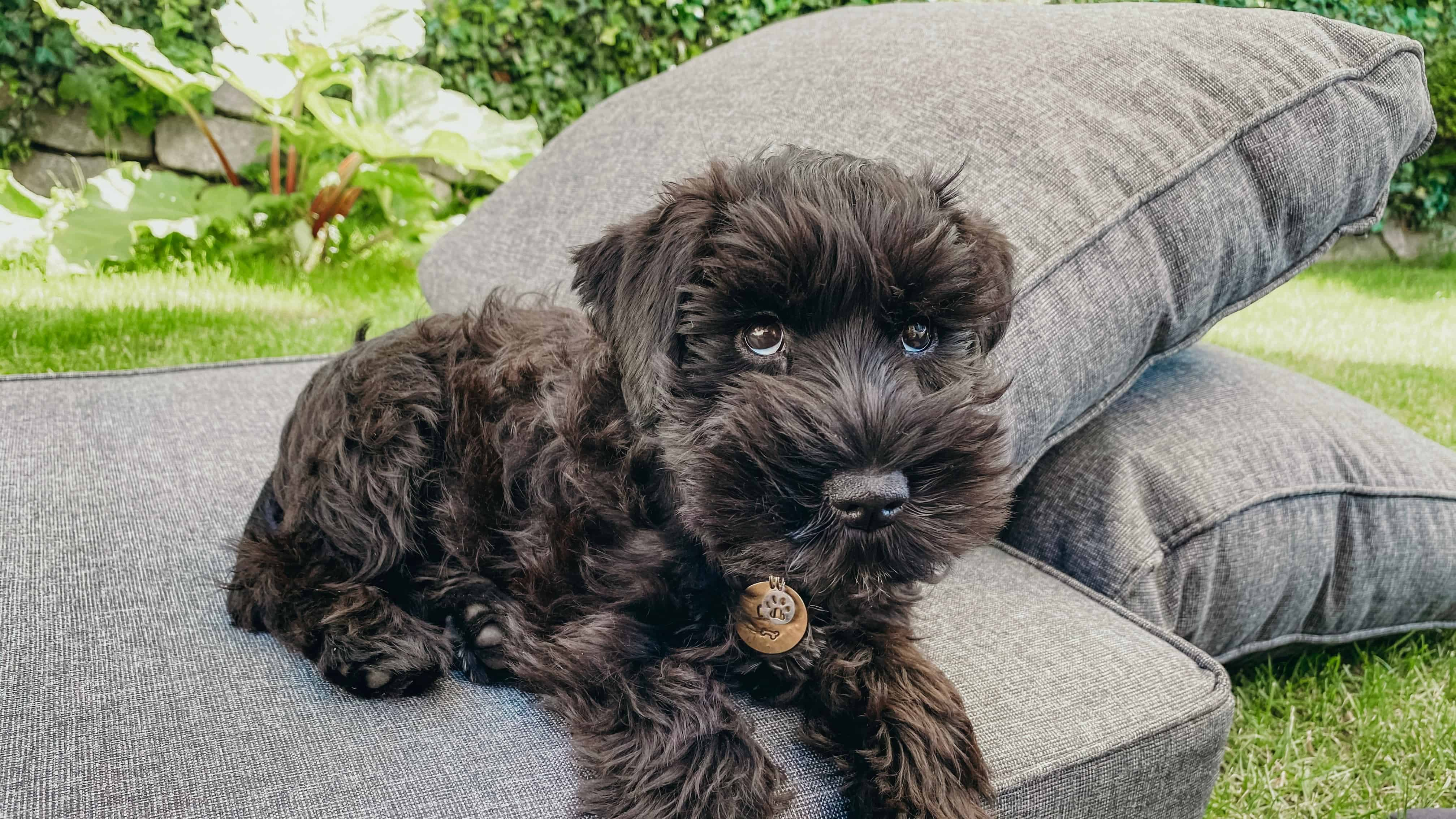 black puppy on cushions on grass