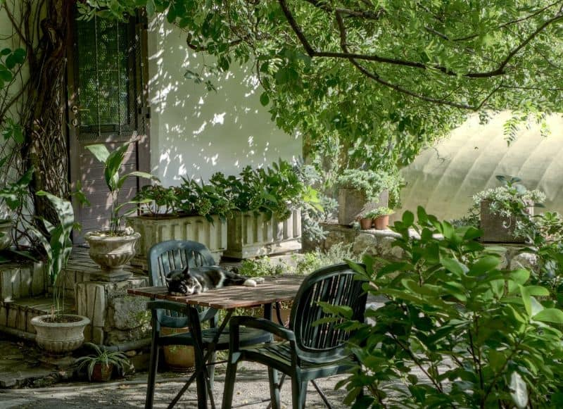 garden furniture in a shady green patio area with a cat on the table