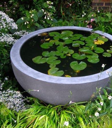 A mini pond made from a big concrete bowl