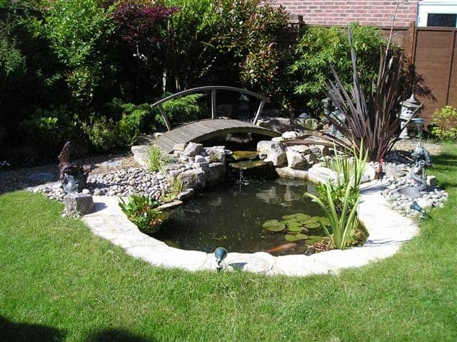 An idyllic koi pond in a sunny space