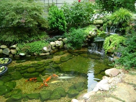 Natural-looking koi pond,