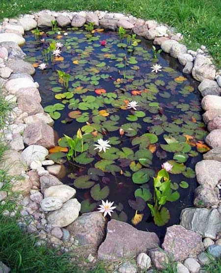 A charming pond filled with water lilies