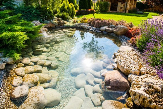 A fish pond with reflective depth