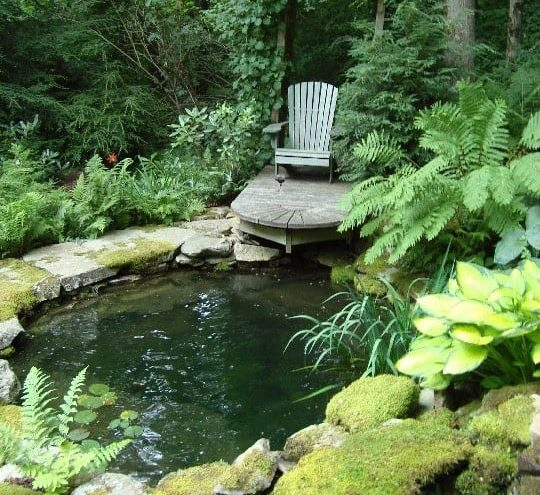 A garden pond with shade