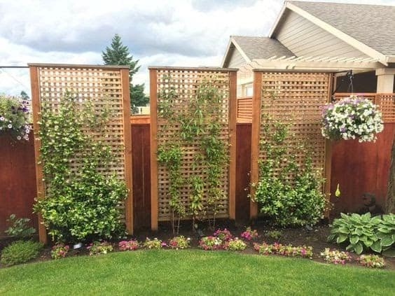 Trellis with climbing flowers and plants as privacy screens