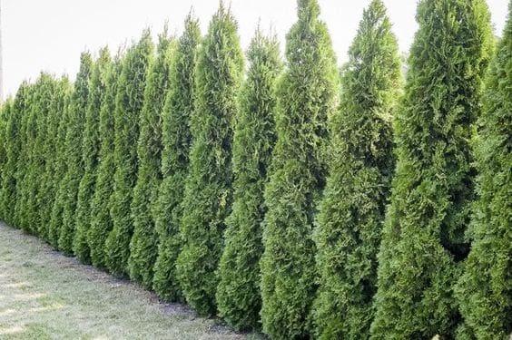 A tree line keeping a backyard private