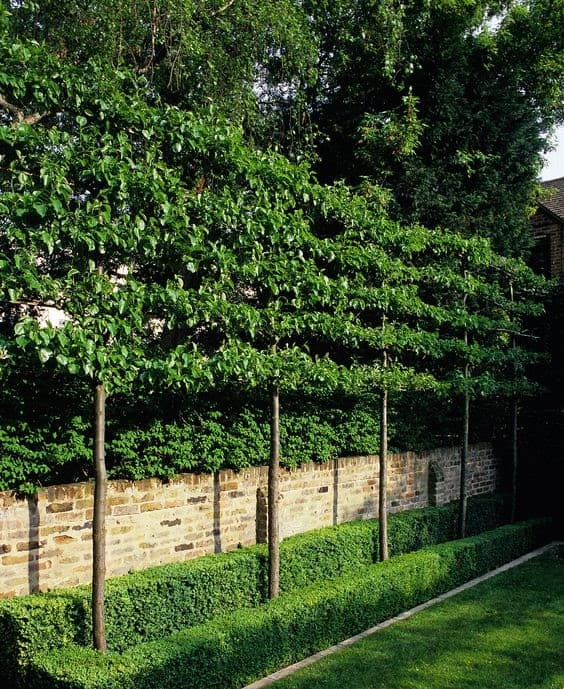 Trees and bushes for added privacy