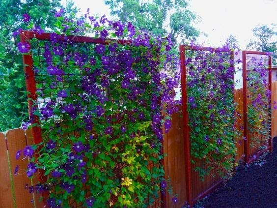 A simple privacy divider with climbing flowers