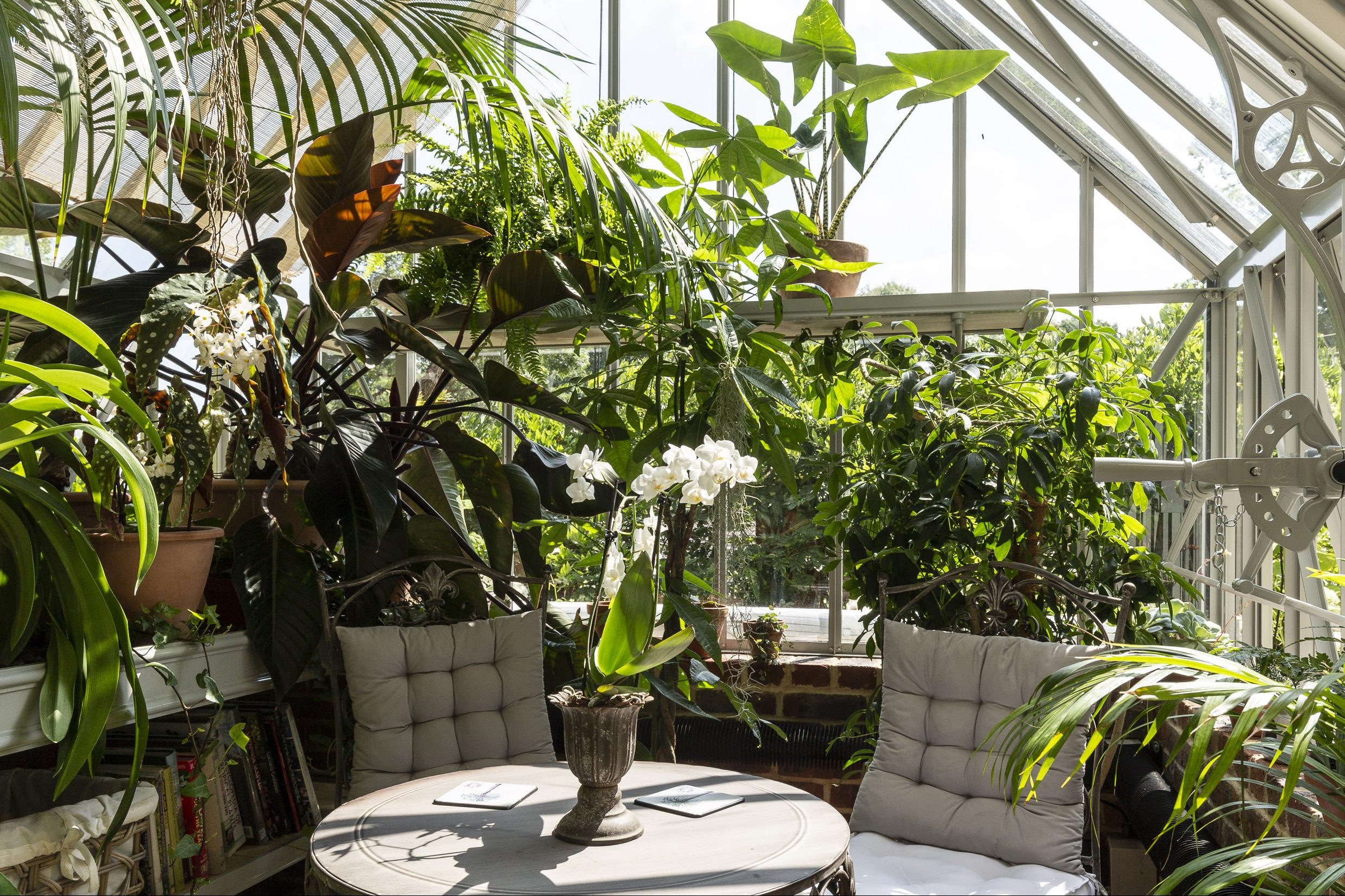 A garden greenhouse with dining area surrounded with small trees and lush green plants