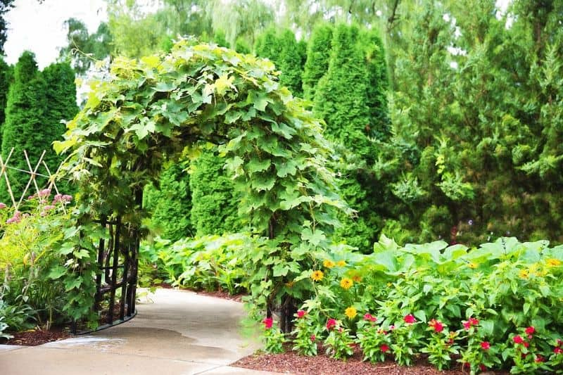 plant archway over a path backed by tall green trees