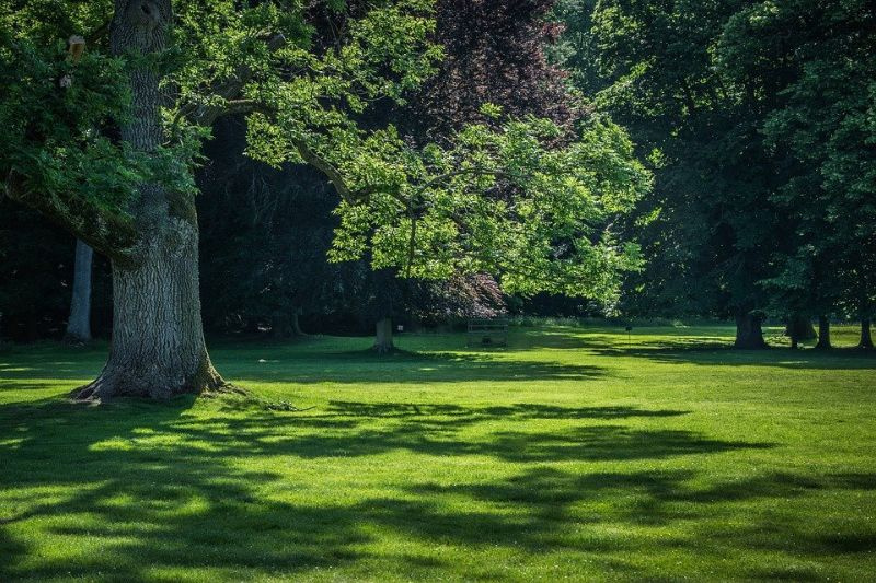 dappled shade from a large tree on a green lawn
