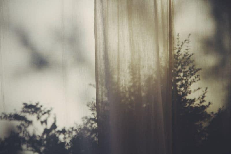 shadows on a bush through a curtain
