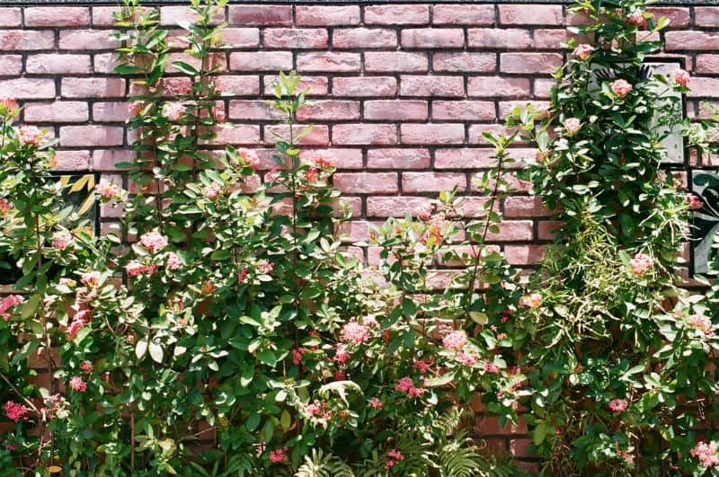 red brick wall with plants growing in front of it