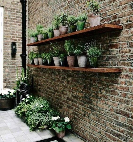 Shelves with plants on brick wall
