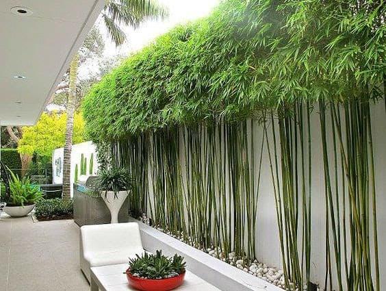 Bamboo trees as a garden wall