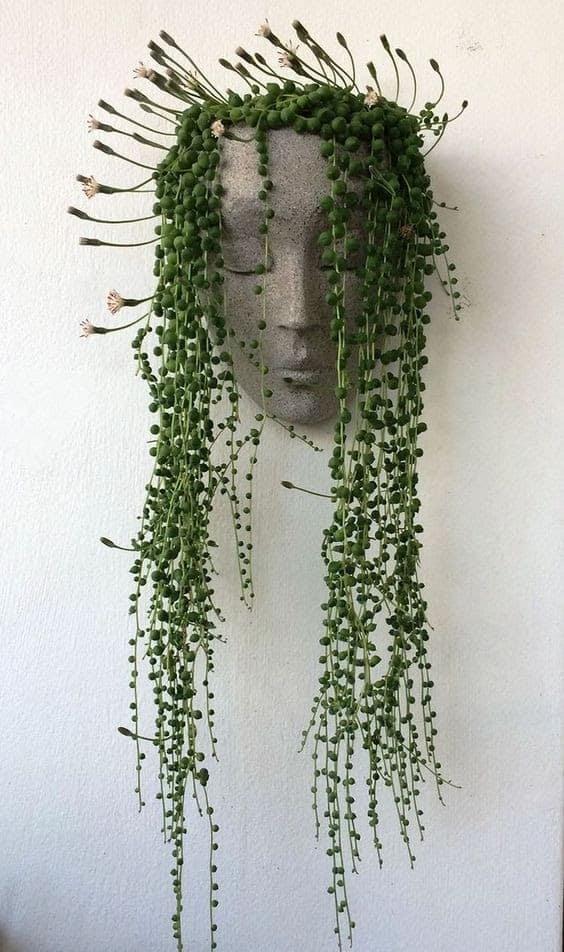 A Medusa-inspired hanging plant