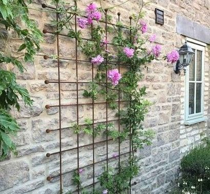 A trellis panel and some climbing plants and flowers