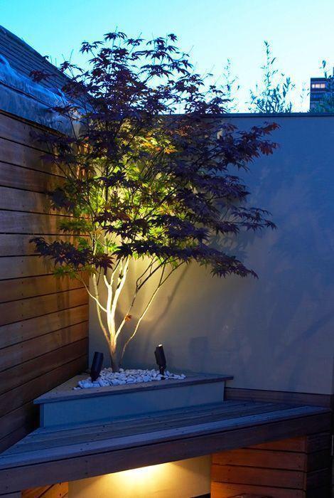 lit up corner tree