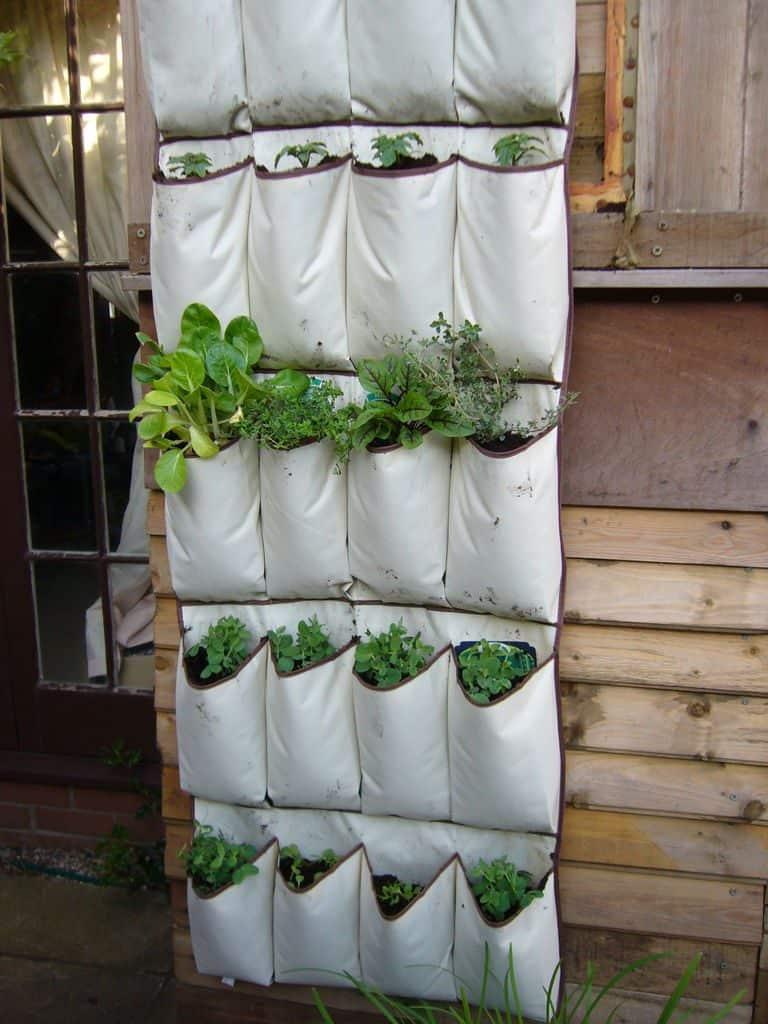 shoe organiser planter