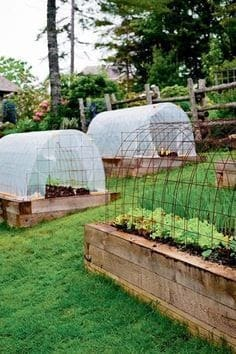 Garden beds and mini polytunnels