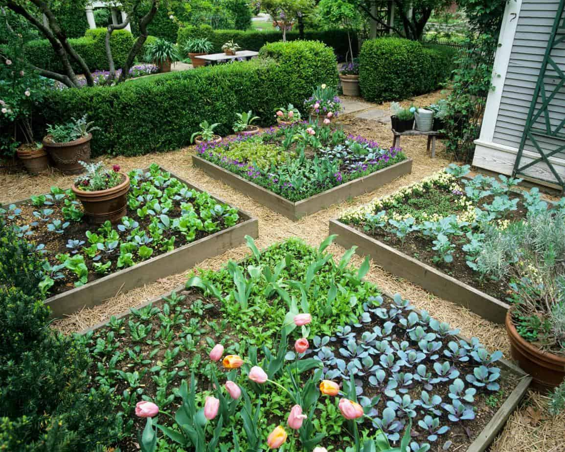 Compact garden with flowers