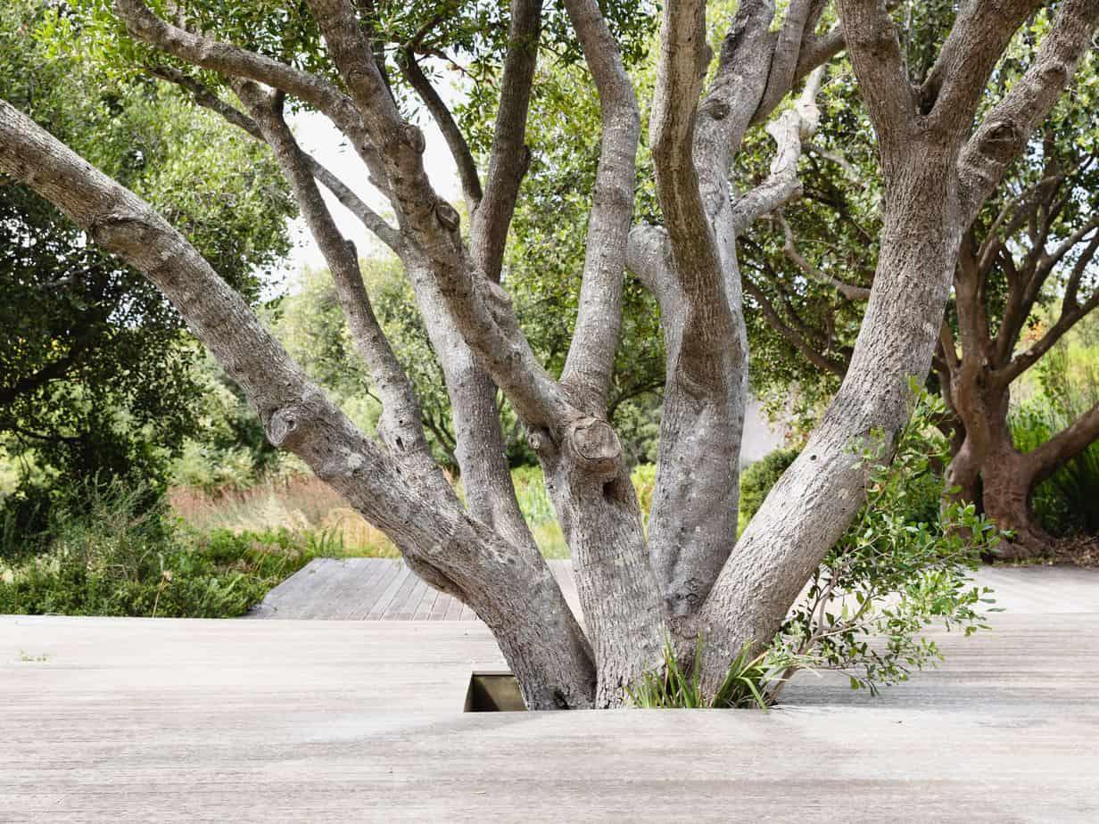 A garden path around tree
