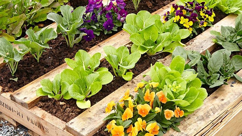 DIY pallet garden beds for the veggies