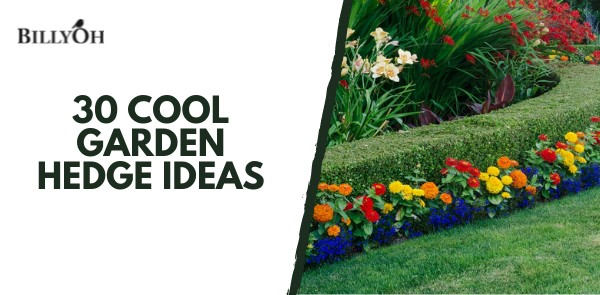 BillyOh 30 Cool Garden Hedges Ideas