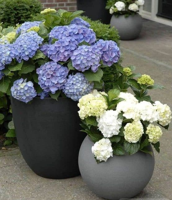 Simple planters with colourful flowers