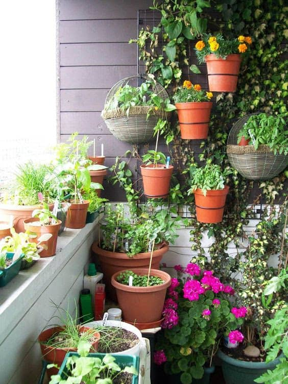 A balcony corner filled with life and greenery