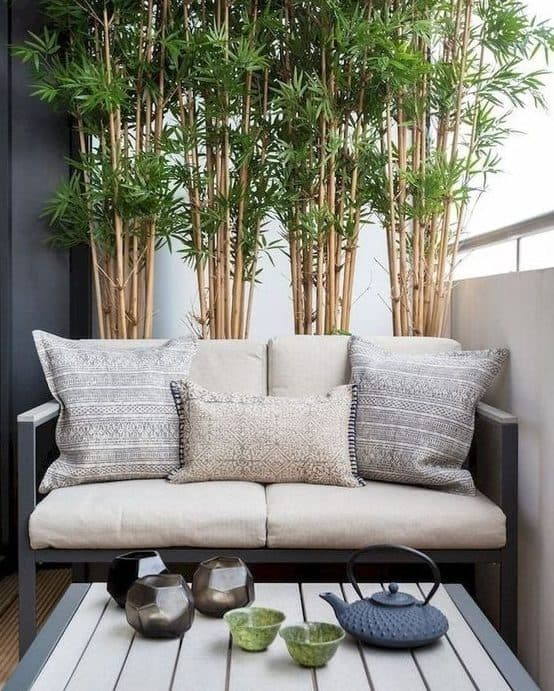 Bamboo on balcony for privacy