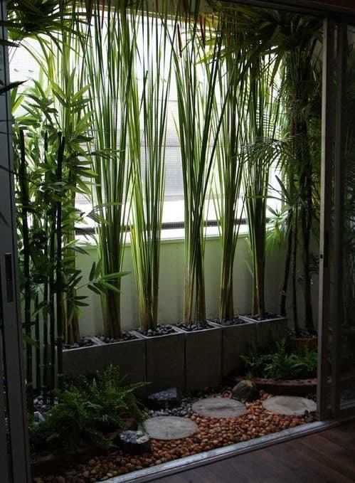 Bamboo and stepping stones