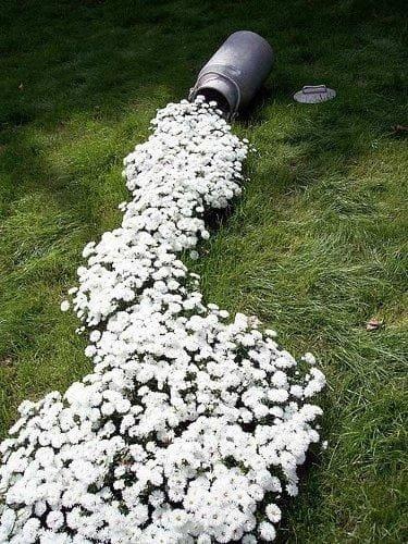DIY flower river