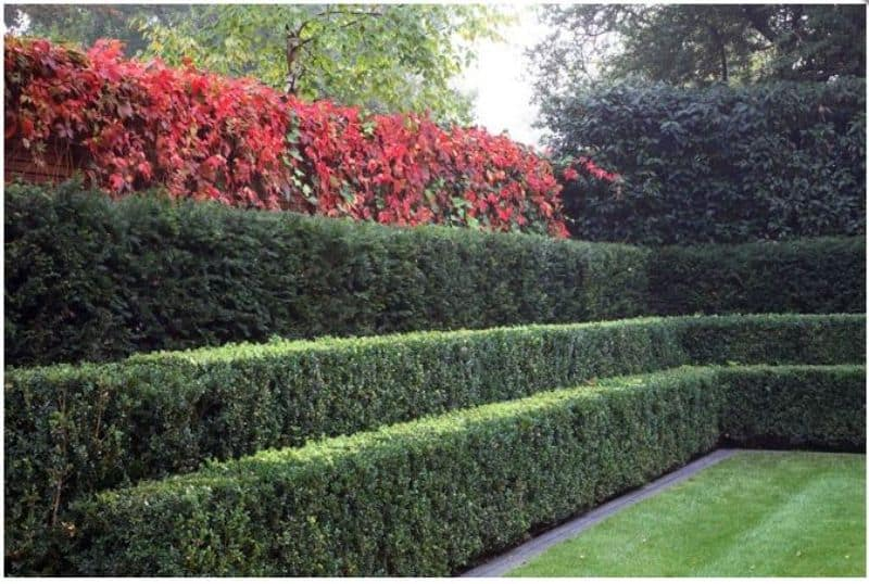 Step hedges that help separate front gardens with a line of red flowers at the top
