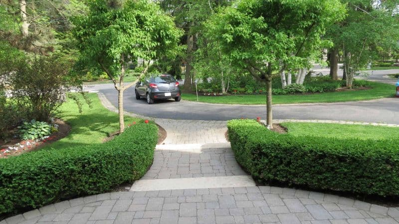 Hedges that lines the borders of a driveway with a car on the road