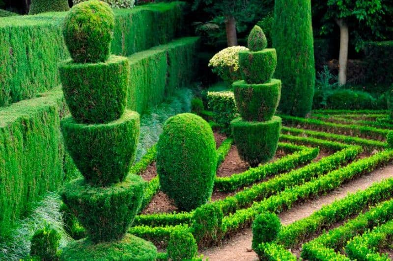 topiary hedges in a stacked fountain shape