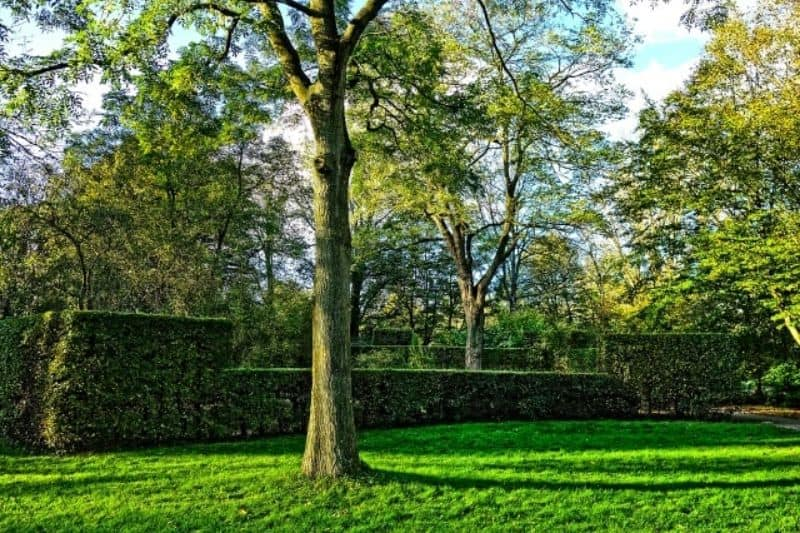 Hedge walls with multiple heights against a green lawn with tall trees