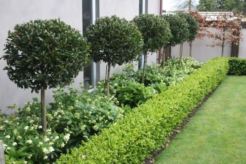 A simple and minimal style of garden hedging