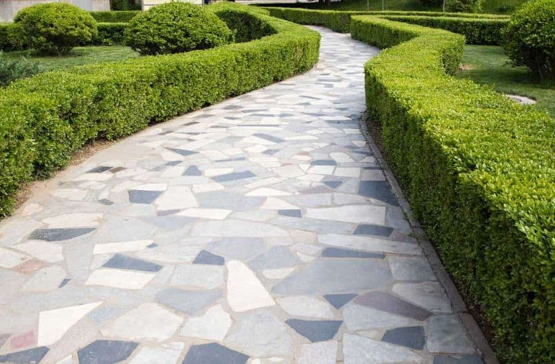 mosaic tile garden path with hedge borders