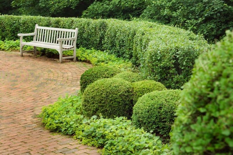 A small outdoor bench surrounded with round garden hedges