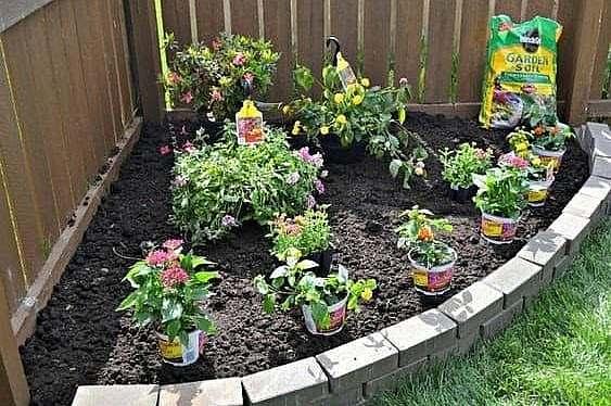 A butterfly garden that adds colour to a garden