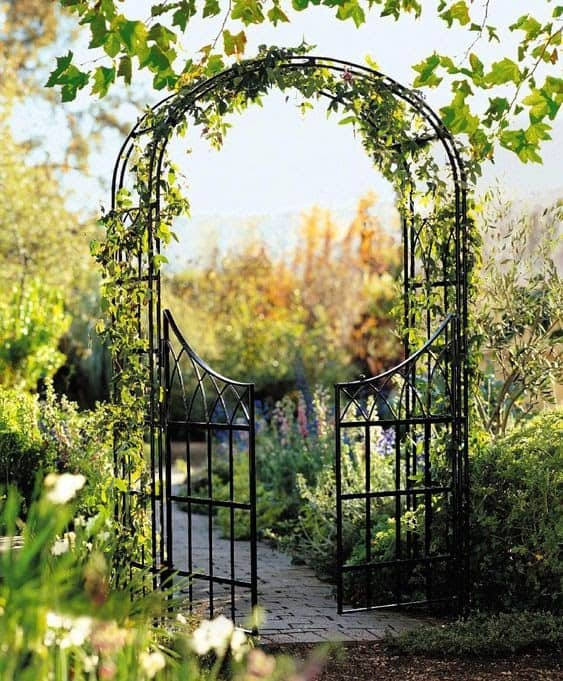 Iron gated arbour with trellis