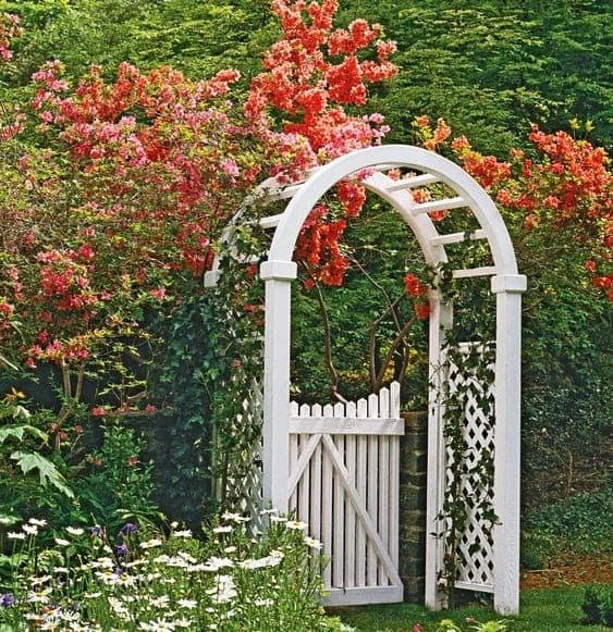 White gate with trellis