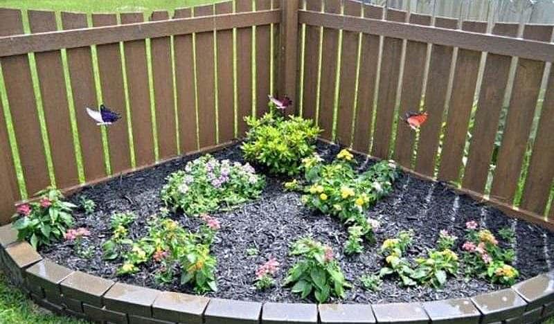 Mini butterfly garden